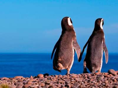 1_maxxi_tours_pinguinera_punta_tombo