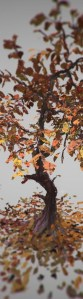 featuredtree