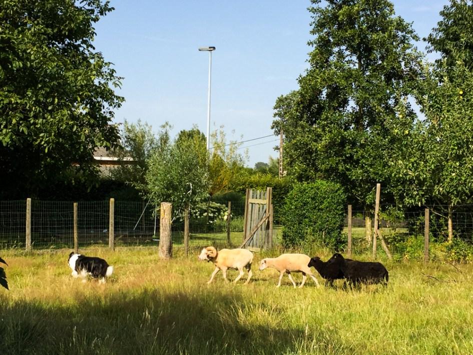 Vlaamse-Ardennen-Wandelwalhalla-26