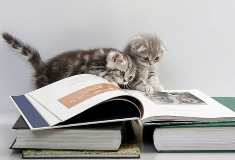 cats_kittens_reading_books_02
