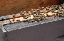 Swarm of arguments greets pesticide ban proposal