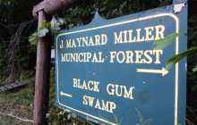 State wants to protect rare black gum swamp in Vernon