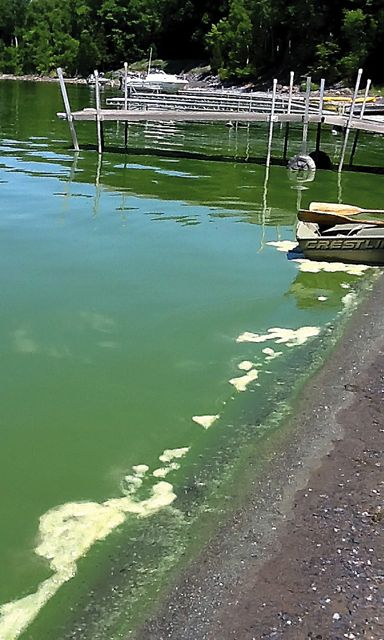 The above photo was taken by Lisa Windhausen on June 29, when blooms of cyanobacteria took over Addison's Oven Bay.