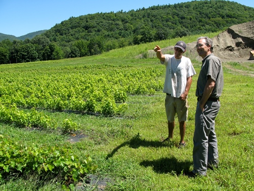 Andy Farmer (left) discusses his young wine grape vinestocks with Vermont Land Trust regional representative Donald Campbell. The Land Trust has been instrumental in getting young farmers established in the Mettowee Valley, one of the most scenic and productive farm regions of Vermont. Photo by Tom Slayton