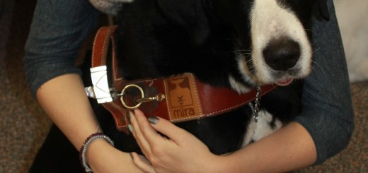 Molly Burke, with her guide dog Gypsy, was the guest speaker at Quill Lake School's Mini We-Day.