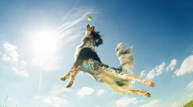 Dog Park Play, dog playing fetch.