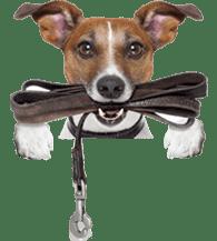 dogwithrope