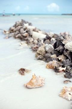 Seashells found on Turks and Caicos