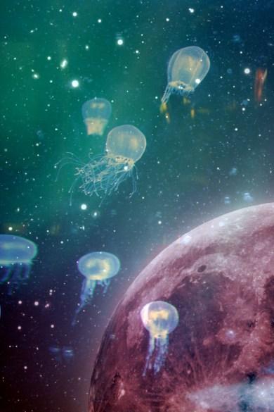 Jellyfishcominghomesm