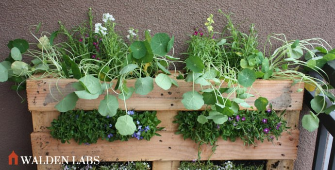 The vertical pallet garden