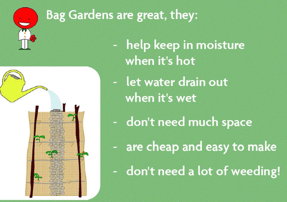 Bag Garden Dynamics