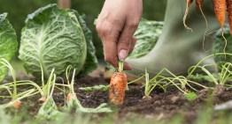Book Review: The Week-by-Week Vegetable Gardener's Handbook