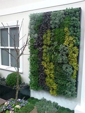 Tray herb garden