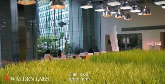 Tokyo Urban Vertical Farm
