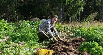 How To Earn $60 Per Hour Growing Potatoes