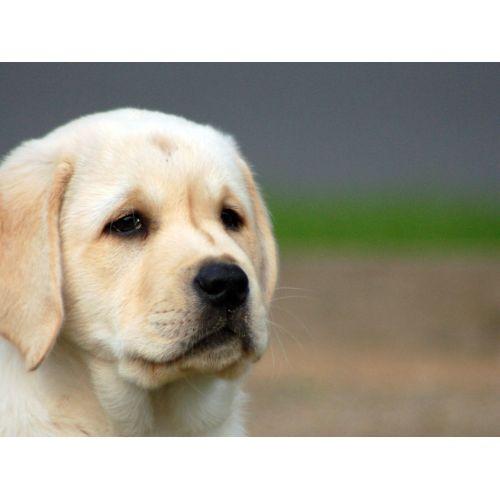 Medium Crop Of Sad Puppy Gif
