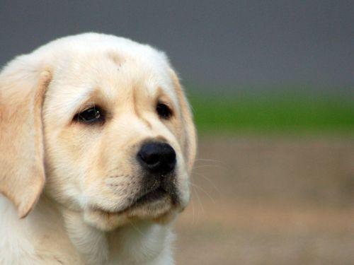 Medium Of Sad Puppy Gif