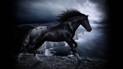 Cool Horse Wallpapers Group (75+)