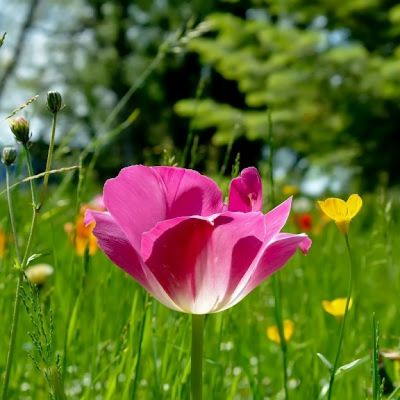 Beautiful Flowers Wallpapers Free Download Group (74+)