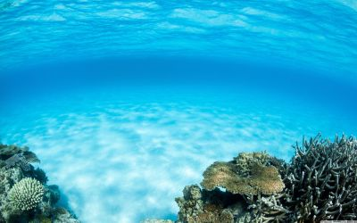 Underwater Wallpapers - Top Free Underwater Backgrounds - WallpaperAccess
