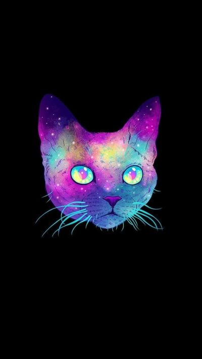 Cool Cat Wallpapers - Top Free Cool Cat Backgrounds - WallpaperAccess
