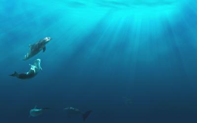 Under Water Wallpapers - Wallpaper Cave