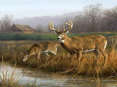 Deer Hunting Backgrounds - Wallpaper Cave