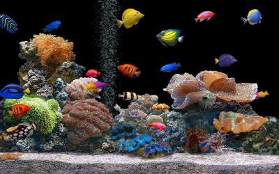 Aquarium Backgrounds Pictures - Wallpaper Cave
