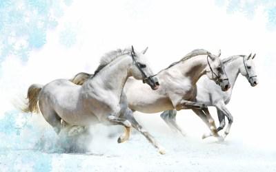 Horse Wallpapers - Wallpaper Cave