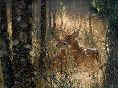 Free Deer Wallpapers - Wallpaper Cave