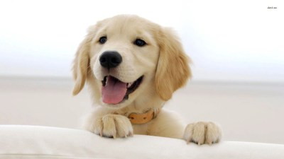 Puppy Wallpapers HD - Wallpaper Cave