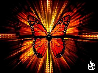 Cool Butterfly Wallpapers - Wallpaper Cave