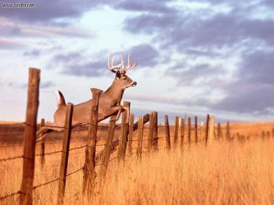 Deer Hunting Backgrounds - Wallpaper Cave