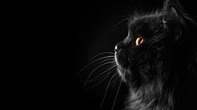 Wallpapers Black Cat - Wallpaper Cave