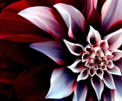 Cool Flower Wallpapers - Wallpaper Cave