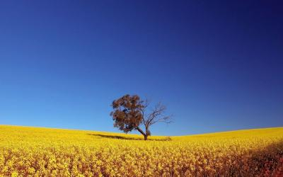 Sunny Day Wallpapers - Wallpaper Cave