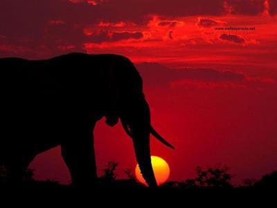 Elephant Desktop Backgrounds - Wallpaper Cave
