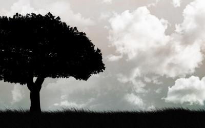 Cool Tree Backgrounds - Wallpaper Cave