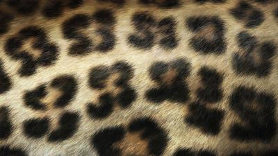 Animal Print Desktop Backgrounds - Wallpaper Cave
