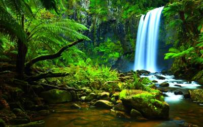 Amazon Rainforest Wallpapers - Wallpaper Cave