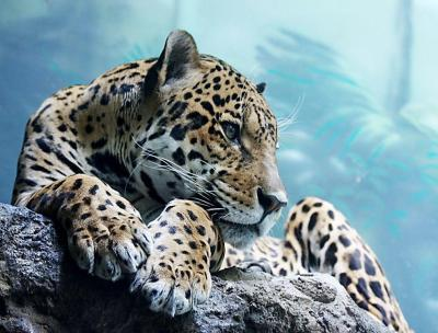 Cool Animal Wallpapers - Wallpaper Cave