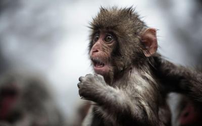 Monkey Wallpapers HD - Wallpaper Cave