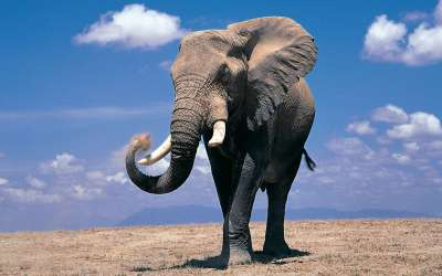 Elephant Wallpapers - Wallpaper Cave