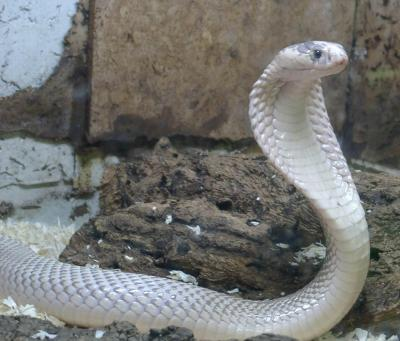 Cool Snake Wallpapers - Wallpaper Cave