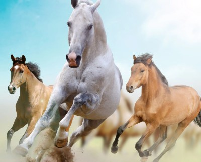 Running Horses Wallpapers - Wallpaper Cave