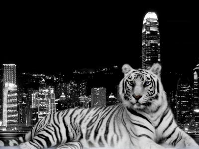 Tiger HD Wallpapers - Wallpaper Cave