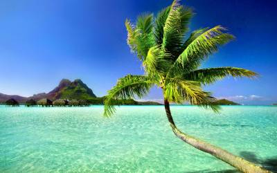 Palm Tree Beach Wallpapers - Wallpaper Cave