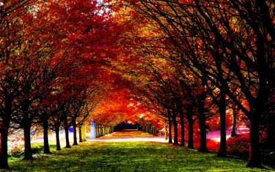 Fall HD Wallpapers