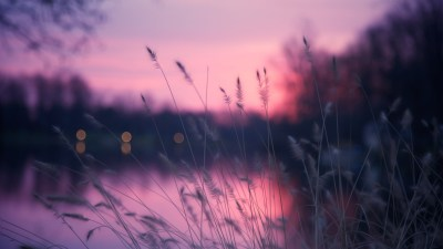 Wallpaper Lake, 4k, HD wallpaper, grass, sunset, purple, Nature #5173