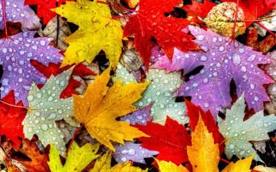 Wallpaper Leaves, 5k, 4k wallpaper, drops, rain, autumn, Nature #12398